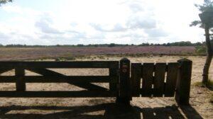 hek met caminowegwijzer in heidelandschap