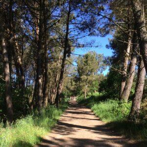 met bomen omzoomd zonnig pad