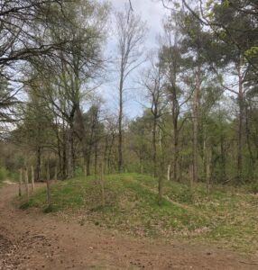 grafheuvel in bosrijke omgeving