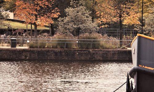 2020 10 07 Regio wandeling Amsterdam-Noord (21)