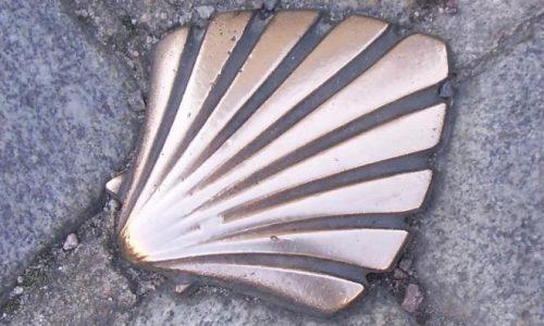 Coquille en bronze – Versie 2 (2)